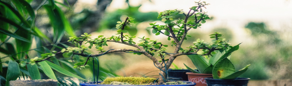 Beitragsbild Amazon Plants